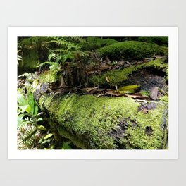 Rainforest Ferns & Moss Art Print
