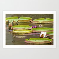 Honey, I Blew Up The Lily Pad Art Print