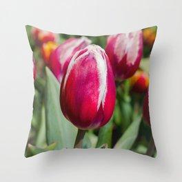 Tulips 3 Throw Pillow