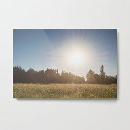 Sunny Oregon meadow full of wildflowers Metal Print