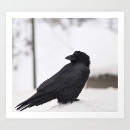 Ravens on the Coquihalla Highway 2 Art Print