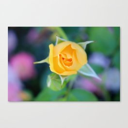 Macro Yellow Tea Rose Canvas Print