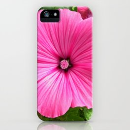 mallow bloom IV iPhone Case