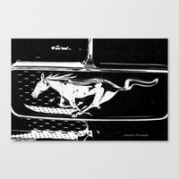 mustang Canvas Prints featuring Mustang  by Heidi Maly