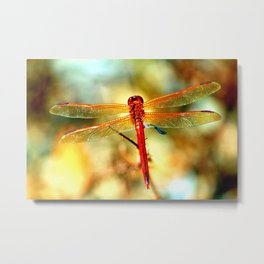 Glistening Red Dragonfly Metal Print