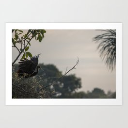 Birds from Pantanal Carão Art Print