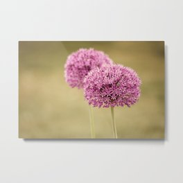 Alliums Metal Print