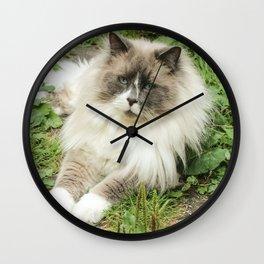 Lord Niles the Ragdoll Wall Clock