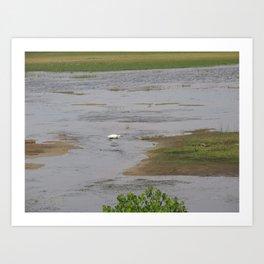 Bird in Chincoteague Marsh Art Print