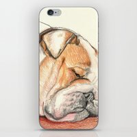 english bulldog iPhone & iPod Skins featuring English bulldog Alfie by Pendientera