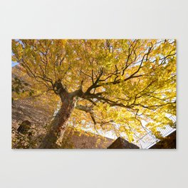 Protected and Protecting Canvas Print