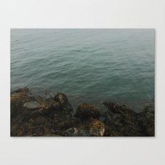Fog Is In The Air Canvas Print