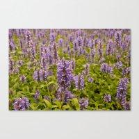 lavender Canvas Prints featuring lavender by Julio O. Herrmann
