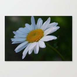 Photo 1 Canvas Print