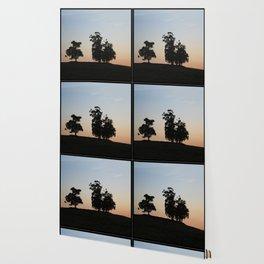 Eucalyptus trees at sunset Wallpaper