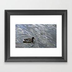 Mallard Framed Art Print