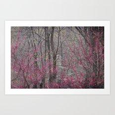 Color shy Art Print