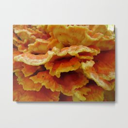 Chicken of the Woods (Laetiporus) Metal Print