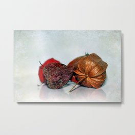 Physalis Part VIII. Metal Print