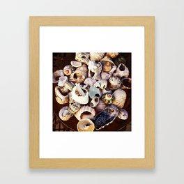 Shell Collection Framed Art Print