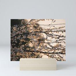 Cherry Plum at Sunset Mini Art Print