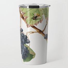 Barbera grape (Vitis vinifera) from Pomona Italiana (1817 - 1839) by Giorgio Gallesio (1772-1839) Travel Mug