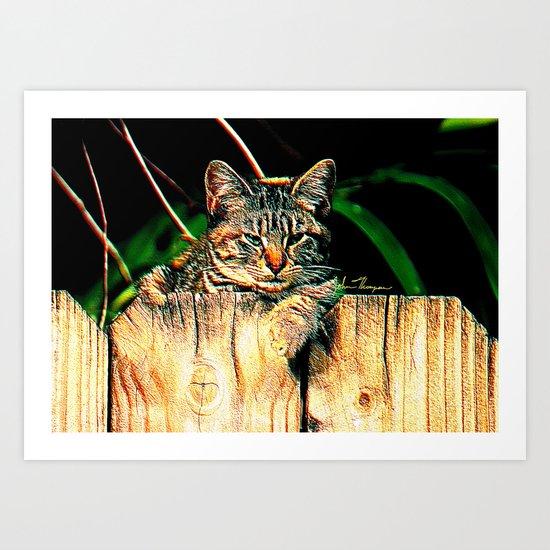 Kitten on a Fence Art Print