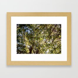 Redwood Ceiling  Framed Art Print