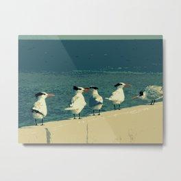 Royal Tern Metal Print