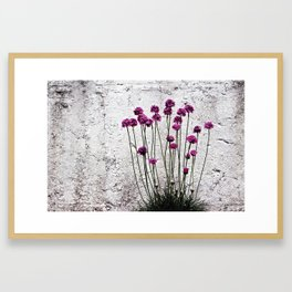 Urban garden. Purple flowers. Framed Art Print
