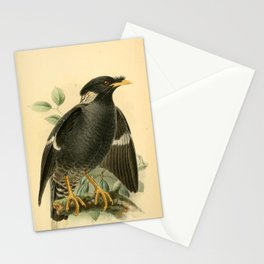 Collared Myna, acridotheres albocinctus14 Stationery Cards