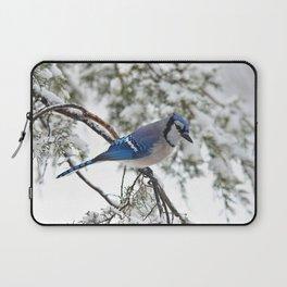 Beautiful Blue Jay Laptop Sleeve