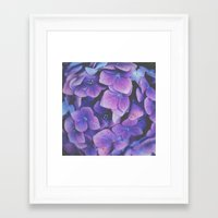 hydrangea Framed Art Prints featuring Hydrangea by Christine Hall