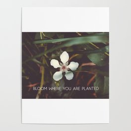 Bloom where you are planted #inspirational Poster