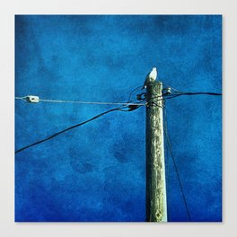 'BIRD ON A WIRE' Canvas Print