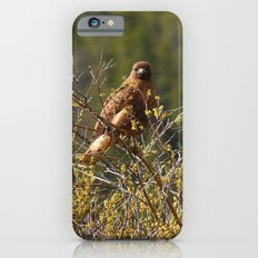 Red-tailed Hawk in the Tetons Slim Case iPhone 6s