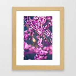 Spring has come 4 Framed Art Print