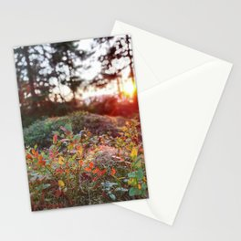 Evening glow in the forest Stationery Cards