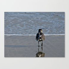 Going for Another Swim Canvas Print