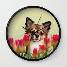 chihuahua between red tulips spring flowers Wall Clock