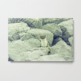Stoat be Alarmed Metal Print