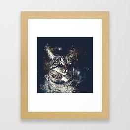koko the cat wsfn Framed Art Print