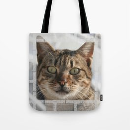 Beautiful Eyed Tabby Cat  Tote Bag