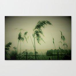 Windblown Rees Canvas Print