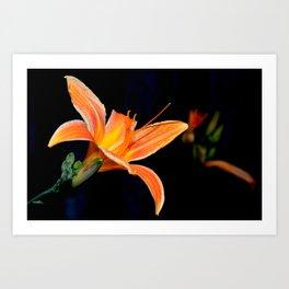 Tangerine Delight Art Print