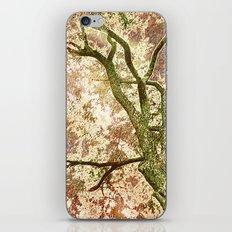Majestic Tree iPhone & iPod Skin