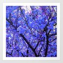 Dogwood Blue Tone by alisonhgross