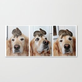 Triple Play with Koa and her bunny Canvas Print