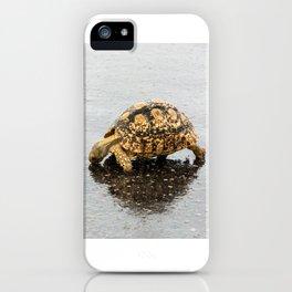 Leopard tortoise drinking on wet road iPhone Case