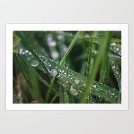 Grass Macro Art Print
